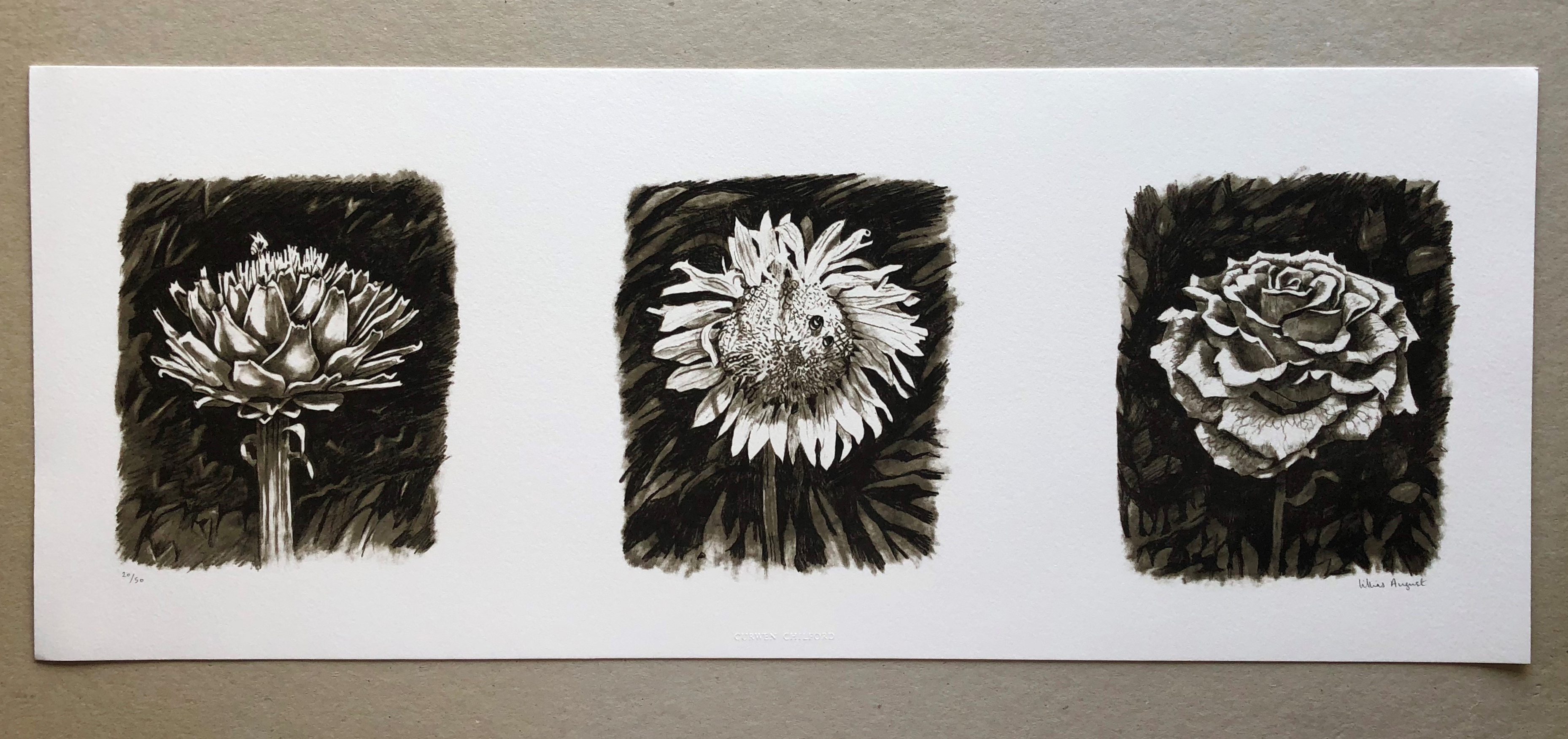 Artichoke, sunflower and rose, 16 x 56cm limited edition print