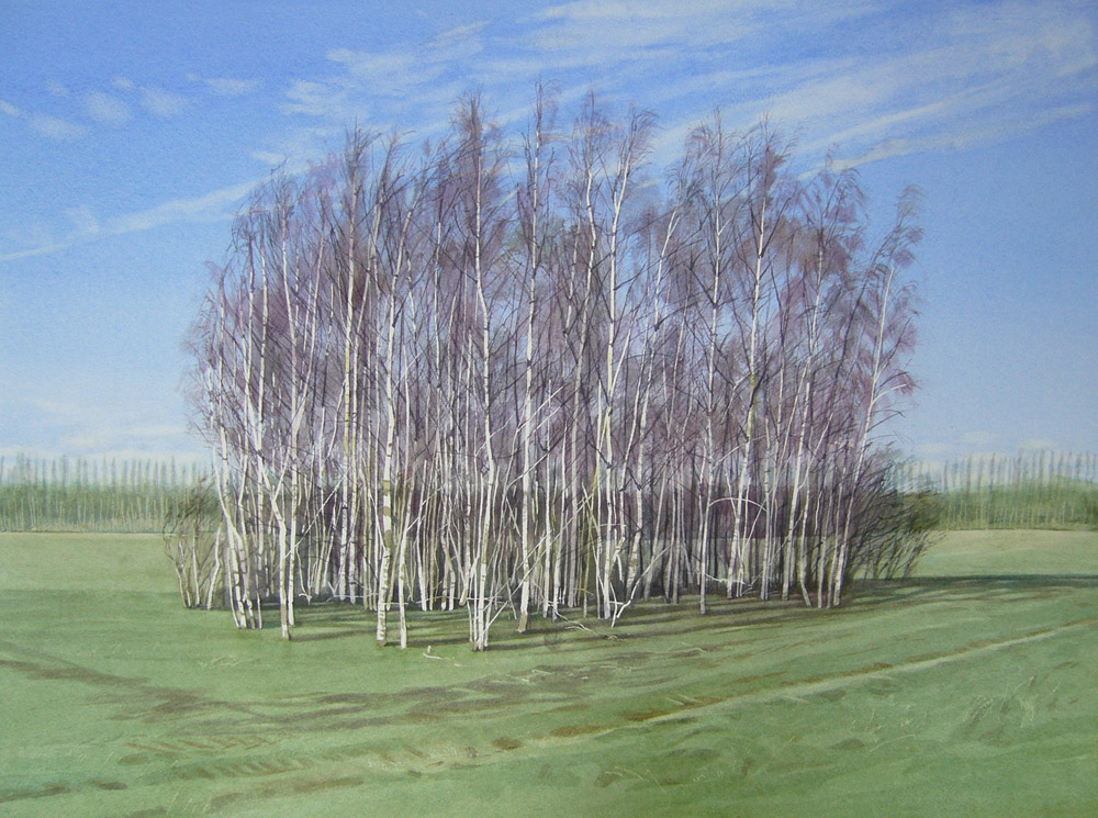 Birch copse 51 x 70cm