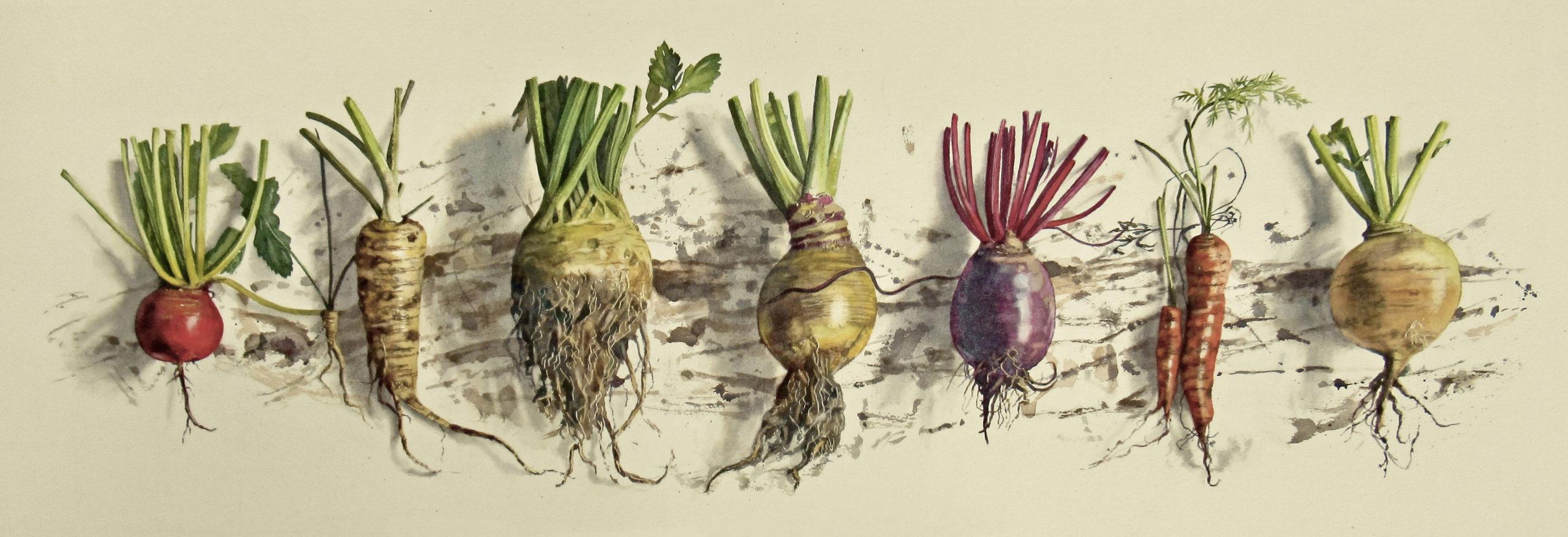 Fresh root veg 29 x 91cm