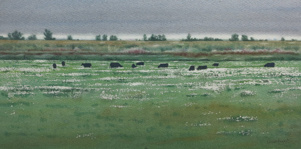 Grazing the washes 22 x 43cm
