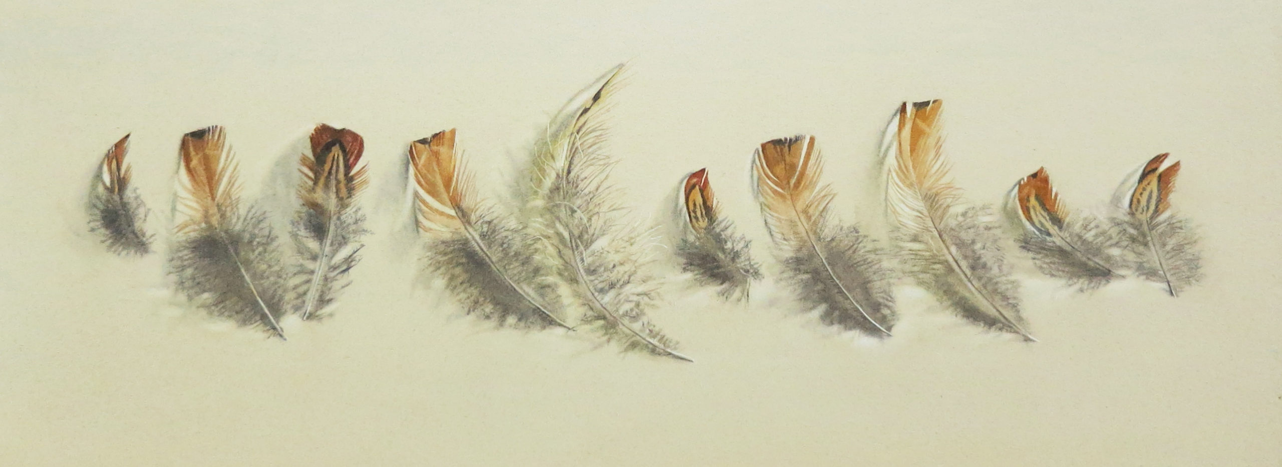 Messy feathers 17.5 x 51cm