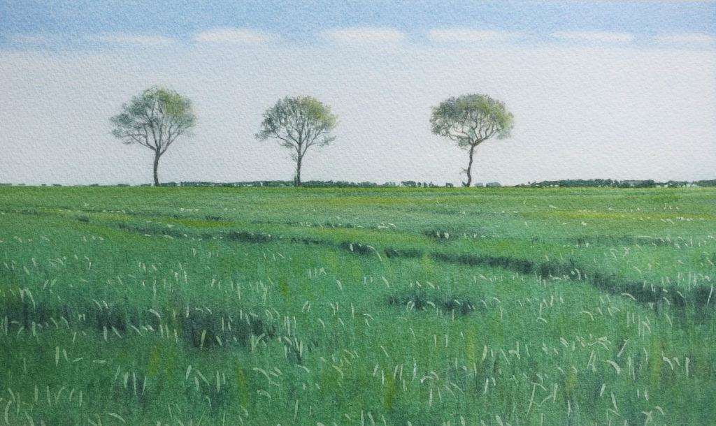 Three trees 19.5 x 32cm