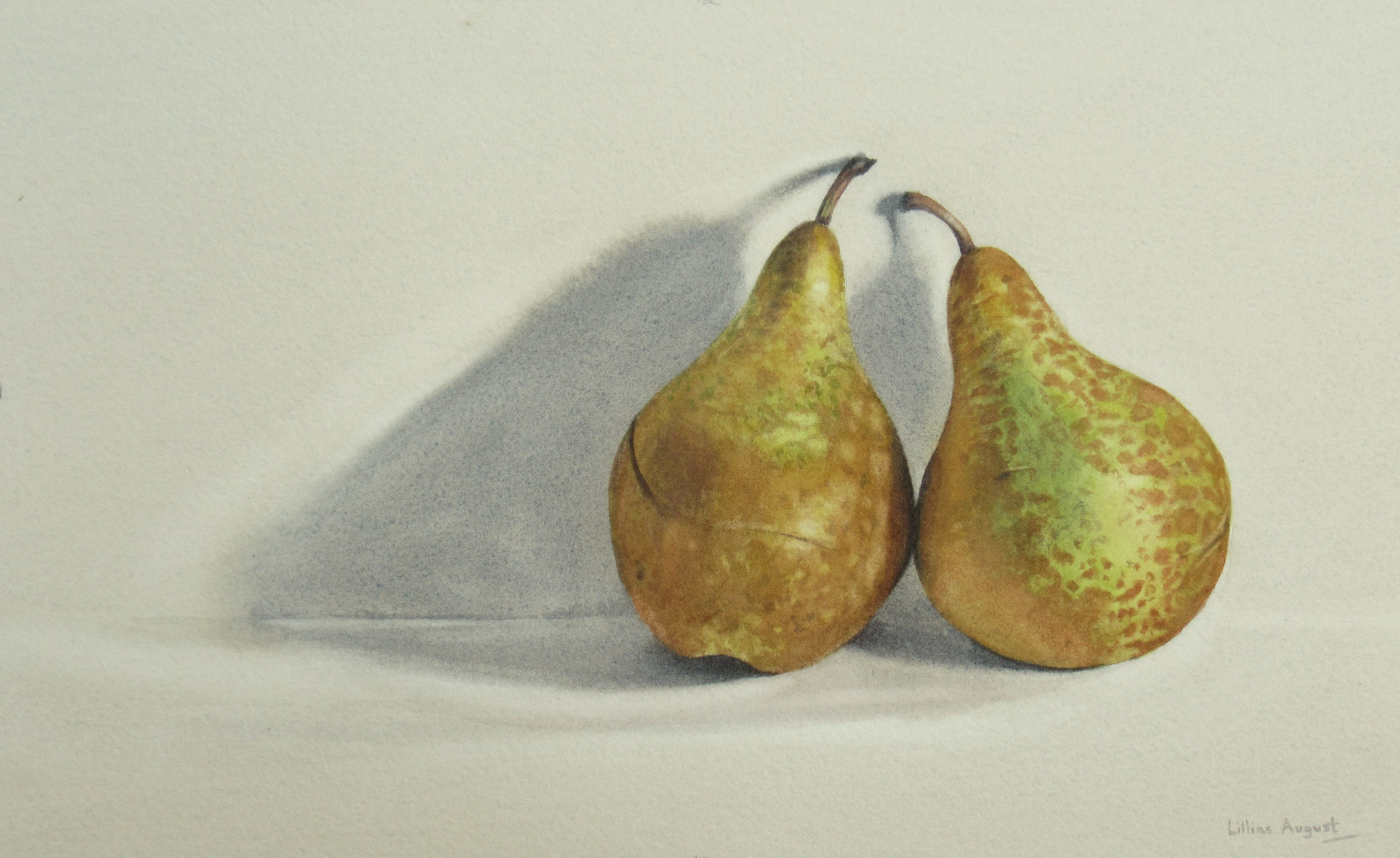 Two fat pears 19 x 32.5cm